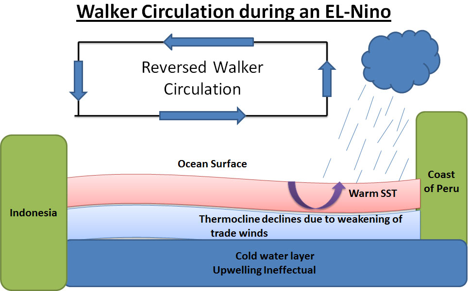 reversed walker circulation during el nino